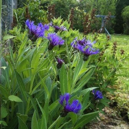 Fleur de mai 1